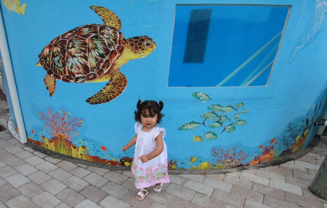 turtle free kids zoo baby mural